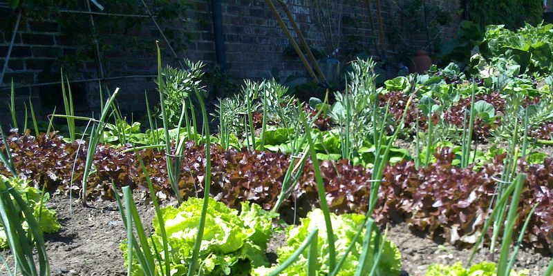 The Best Way To Use Coffee Grounds In Vegetable Gardens